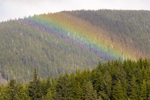 US, AK, Ketchikan. Sunny break in rain creates rainbow stripes on forested hills