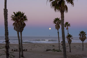 US, CA, Oxnard. Gulls fly above water pre dawn in full moonset