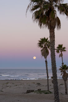 US, CA, Oxnard. Pre dawn in full moonset