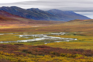 USA, Alaska, Brooks Range. Tundra in fall color