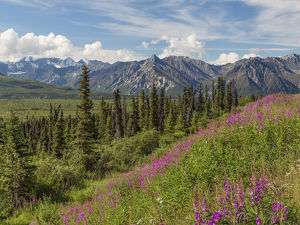 USA, Alaska. Landscape of Chucach Mountains