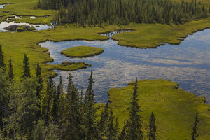USA, Alaska. Landscape with Moose Pond. Credit as: Don Paulson / Jaynes Gallery /