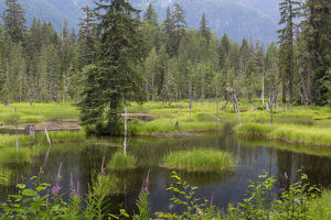 USA, Alaska, Tongass National Forest. Landscape with Moose Pond