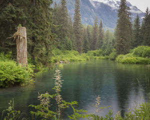 USA, Alaska, Tongass National Forest. Landscape with Beaver Pond on Fish Creek. Credit as
