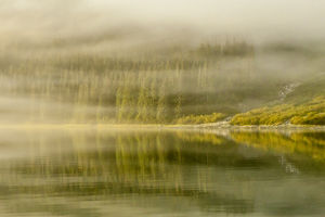 USA, Alaska, Tongass National Forest. Endicott Arm in fog