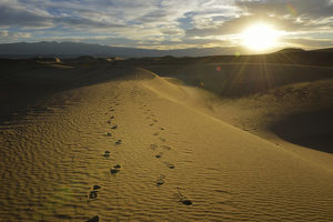 USA, California, Death Valley, Footprints on the dunes at the Mesquite Flat Sand Dunes