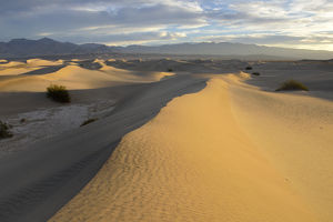 USA, California, Death Valley, Mesquite Flat Sand Dunes at sunrise