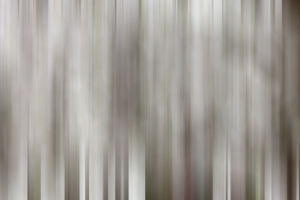 abstract/usa california owens valley abstract dogwood