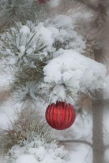 USA, Colorado. Fresh snowfall on tree and Christmas ornaments