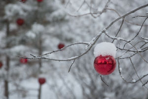 USA, Colorado. Fresh snowfall on trees and Christmas ornaments
