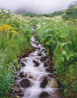 USA, Colorado, Rocky Mountains. Stream flows down hillside