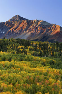 USA, Colorado, San Juan Mountains. Mount Wilson and autumn-colored forest. Credit as