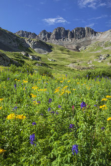 USA, Colorado, San Juan Mountains. Wildflowers in American Basin valley. Credit as