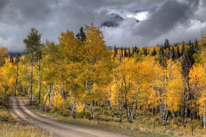 USA, Colorado, San Juan Mountains. Dirt road through autumn aspens
