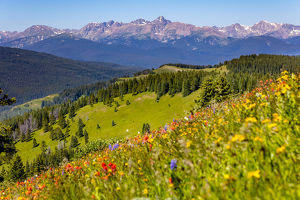 USA, Colorado, Shrine Pass, Vail. Wildflowers on mountain landscape
