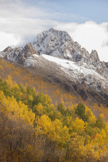 USA, Colorado, Uncompahgre National Forest. Mt Sneffels and autumn-colored aspens
