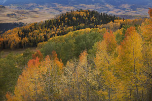 USA, Colorado, Uncompahgre National Forest