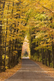 USA, Michigan. Trees lining Cathedral Road form a cathedral like shape overhead