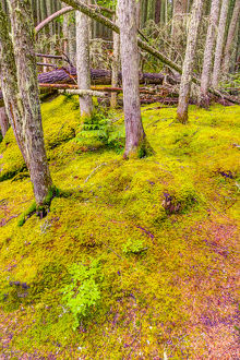 USA, Montana, Glacier National Park. Forest scenic