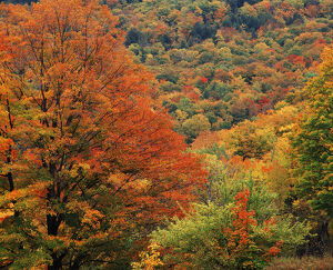 usa new england view autumn forest