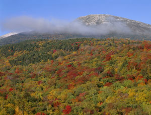 USA, New Hampshire, White Mountain National Forest, Fall colored hardwoods beneath