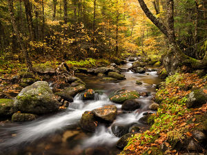 USA, New Hampshire, White Mountains, Fall color on Jefferson Brook