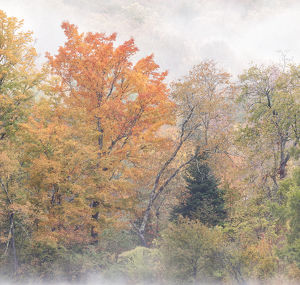 USA, New Hampshire, White Mountains, Fog swirls around maples at Coffin Pond