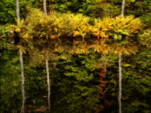 USA, New Hampshire, White Mountains, Fern reflections