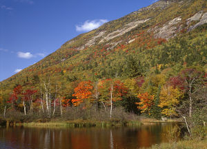 USA, New Hampshire, White Mountains, Crawford Notch State Park, Fall-colored northern