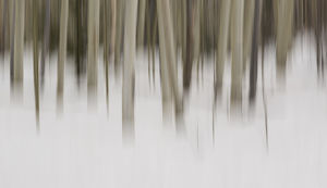 USA, New Mexico. Artistic Blur of Aspen Trees in Snow
