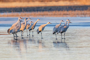 USA, New Mexico, Bosque del Apache Natural Wildlife Refuge