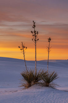 USA, New Mexico, White Sands National Monument. Sunset on desert and yucca. Credit as