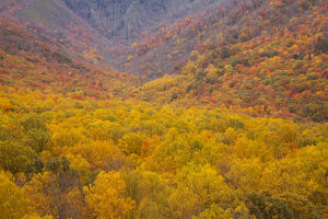 USA; North America, Smoky Mountains National Park; Fall foliage in the Smoky Mountains