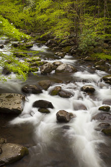 USA; North America; Tennessee; Great Smoky Mountain NP; Little River cascading over