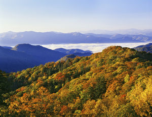 USA, North Carolina, Great Smoky Mountains National Park. Forest in autumn color