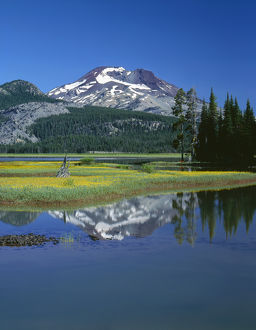 USA, Oregon, Deschutes National Forest, Leafy arnica blooms on an island in Sparks