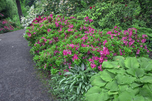 USA, Oregon, Portland, Crystal Springs Rhododendron Garden, Rhododendrons and azaleas