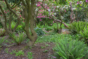 USA, Oregon, Portland, Crystal Springs Rhododendron Garden, Woody branches of