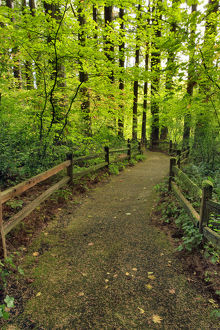 USA, Oregon, Portland. Trail to historic site of The Willamette Stone. Credit as