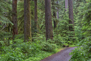 USA, Oregon, Willamette National Forest, Opal Creek Scenic Recreation Area, Trail
