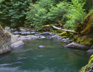 USA, Oregon, Willamette National Forest, Middle Santiam Wilderness, Deep, green pool