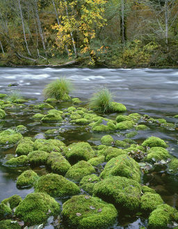 USA, Oregon, Willamette National Forest, McKenzie River, moss-covered rocks