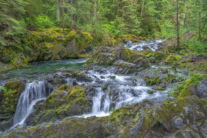 USA, Oregon, Willamette National Forest, Opal Creek Scenic Recreation Area, Multiple