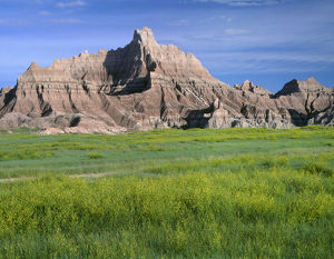 USA, South Dakota, Badlands National Park, North Unit, Yellow sweet clover blooms