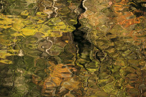abstract/usa tennesse fall reflections little river