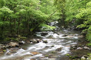 USA, Tennessee, Great Smoky Mountains National Park. Cascading stream landscape. Credit as