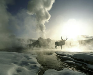 USA, Wyoming, Yellowstone