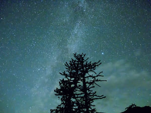 WA, Alpine Lakes Wilderness, Ingalls Pass, Milky Way and trees