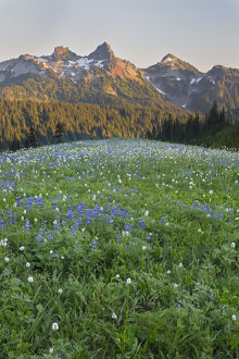 WA, Mount Rainier National Park, Tatoosh Range and Wildflowers