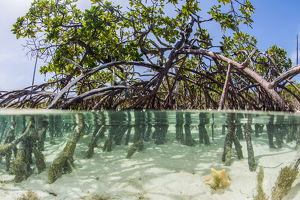 caribbean/exuma/water photograph mangrove tree clear tropical